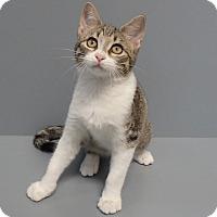 Adopt A Pet :: Tucker - Seguin, TX