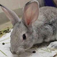 Adopt A Pet :: JOE - Fort Wayne, IN
