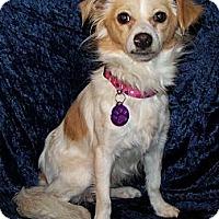 Adopt A Pet :: Lula - San Angelo, TX