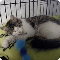 Adopt A Pet :: Mitsy - Speonk, NY