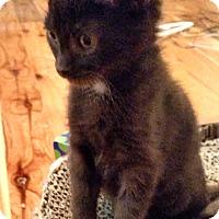 Adopt A Pet :: Otter - Davis, CA