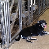Husky Mix Dog for adoption in Walthill, Nebraska - Pee Wee
