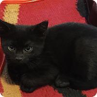 Adopt A Pet :: Cupcake - N. Billerica, MA