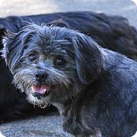 Adopt A Pet :: Piper - Peru, IN
