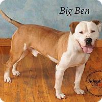 Adopt A Pet :: Big Ben - Topeka, KS