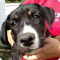 Adopt A Pet :: Princess Kinsley - Houston, TX