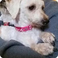 Adopt A Pet :: Prim - Columbus, IN