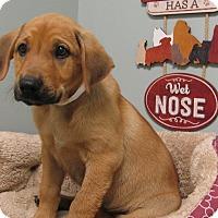 Adopt A Pet :: John - South Dennis, MA