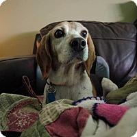 Adopt A Pet :: Eddie - Birmingham, AL