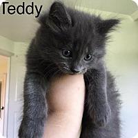 Adopt A Pet :: Teddy - Naugatuck, CT