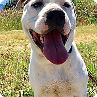 Adopt A Pet :: Sampson - Grants Pass, OR