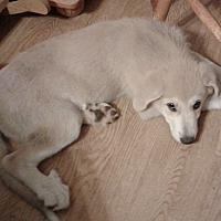 Adopt A Pet :: Bobbi - Kyle, TX