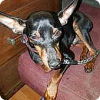 Adopt A Pet :: Patrick - Pelzer, SC