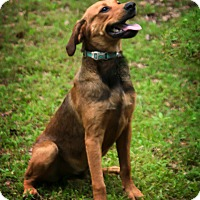Adopt A Pet :: Ted - Harrisburg, PA