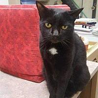 Adopt A Pet :: Nittany2 - Harleysville, PA