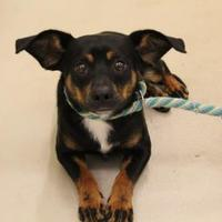 Adopt A Pet :: Underdog - Brunswick, GA