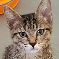 Adopt A Pet :: Sydney - Colfax, IA