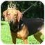 Photo 3 - Hound (Unknown Type)/German Shepherd Dog Mix Dog for adoption in Jacksonville, Florida - Meg
