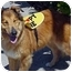 Photo 3 - Collie Mix Dog for adoption in Spring Valley, California - Holly
