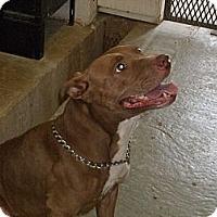 Adopt A Pet :: Aubree - Windsor, MO