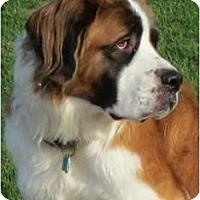 Adopt A Pet :: Heidi - Glendale, AZ