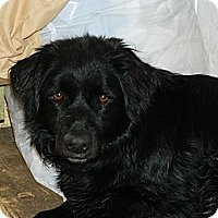 Adopt A Pet :: Bailey - Nanuet, NY