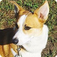 Adopt A Pet :: Dwight - Jacksonville, FL