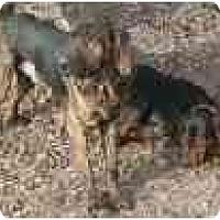 Adopt A Pet :: GUNNER - Georgetown, KY