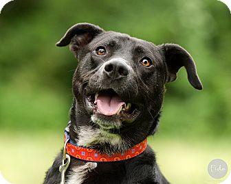 Labrador Retriever Mix Dog for adoption in Wilmington, Delaware - Toby