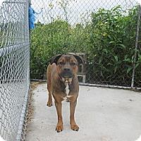 Adopt A Pet :: URGENT Kimmy - Cornwall, ON