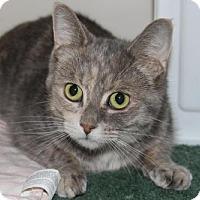 Adopt A Pet :: Fluffy - Hamilton, ON