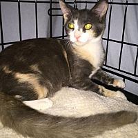 Adopt A Pet :: Skye - Monrovia, CA