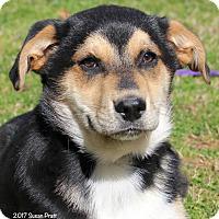 Adopt A Pet :: Timber - Bedford, VA
