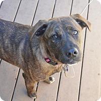 Adopt A Pet :: Carter - DeForest, WI