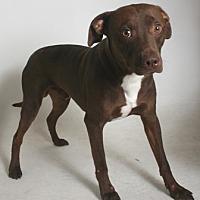 Adopt A Pet :: Frankie - Redding, CA