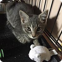 Adopt A Pet :: Petunia - Bethpage, NY