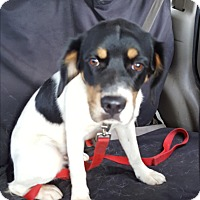 Adopt A Pet :: Shorty - Ararat, VA