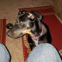 Adopt A Pet :: Grits - Blue Bell, PA
