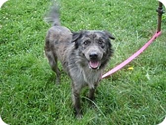 Australian Shepherd Mix Dog for adoption in Hammonton, New Jersey - Shadow