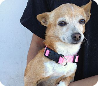 Chihuahua Mix Dog for adoption in Los Angeles, California - Mama - URGENT! - 6 lbs!