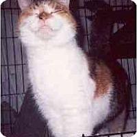 Adopt A Pet :: Taffie - Clementon, NJ