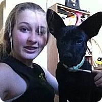 Adopt A Pet :: Sally May - Hancock, MI