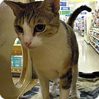 Adopt A Pet :: Lacie - Miami, FL