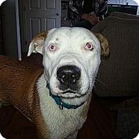 Adopt A Pet :: Einstein - Calgary, AB