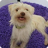 Adopt A Pet :: COOPER - Salt Lake City, UT
