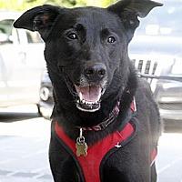 Adopt A Pet :: Blair - Richmond, VA