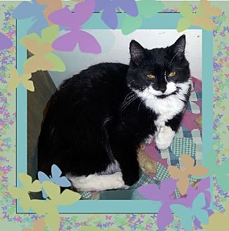 Maine Coon Cat for adoption in Richmond, Virginia - Fanny