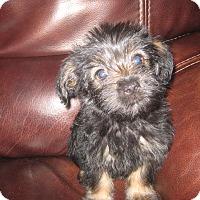 Adopt A Pet :: Dixie - Playa Del Rey, CA