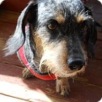Adopt A Pet :: Jessie - dewey, AZ
