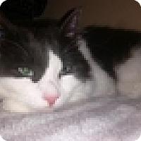 Adopt A Pet :: Westley - Vancouver, BC